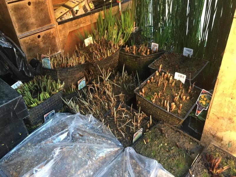 Communal Pond filter upgrade and aquatic vegetation installation Harrow, Middlesex
