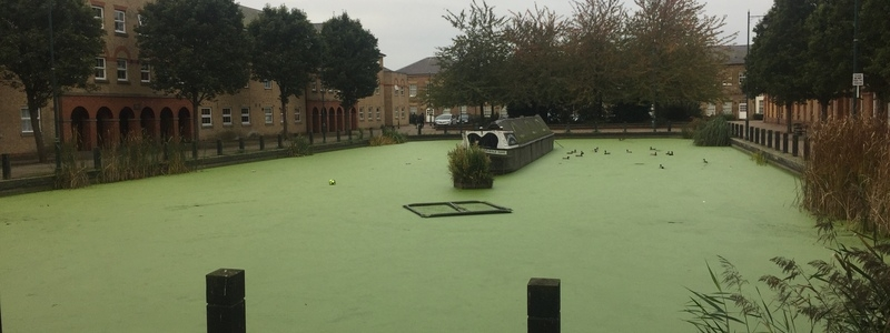 Duck weed removal Enfield, London