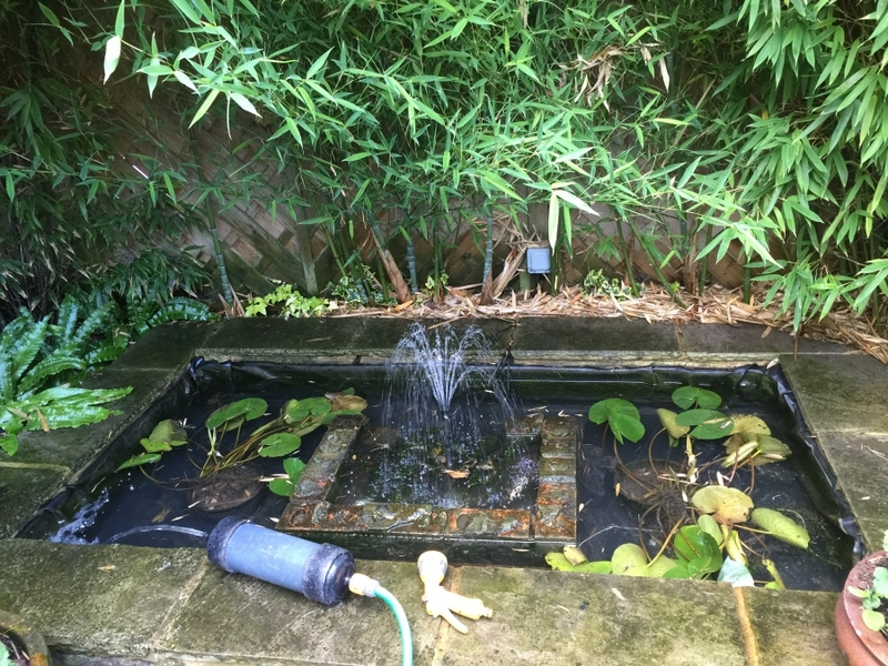 Canonbury Park, Islinton, London pond clean