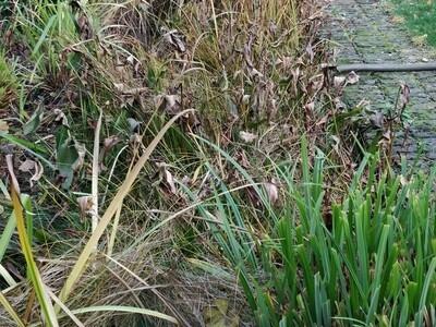 Hanwell, London pond cleean