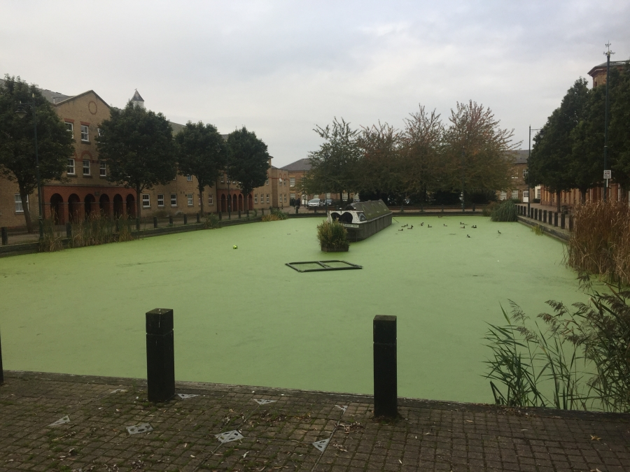 Pond, Lake and Fishery Maintenance & Management