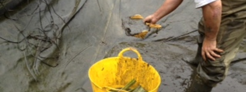 Pond cleaning company in Essex