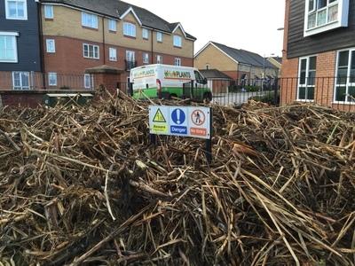 Reedbed removal, Hertfordshire
