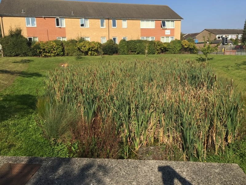 Reedbed removal, Hertfordshire