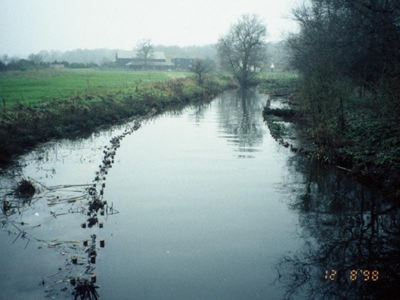 River Lea, Bayford, Hertfordshire planting