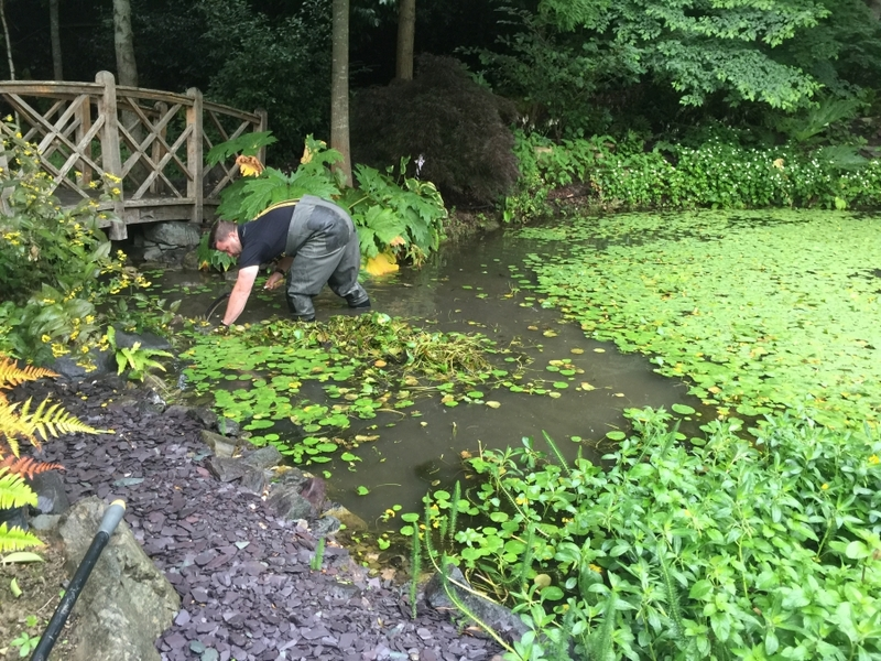Cuffley, Hertfordshire weed removal