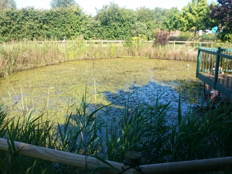 Over Cambridgeshire weed removal and fountain installation