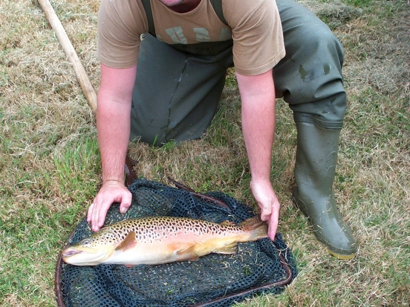 Amwell Magna fishery Hertfordshire fish transportation