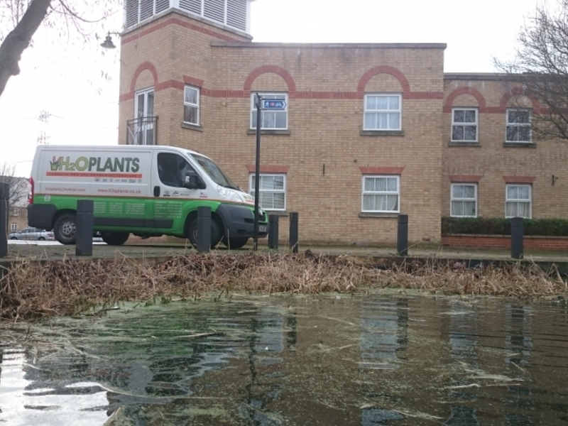 Enfield Island Village aquatic weed removal from canal and basin