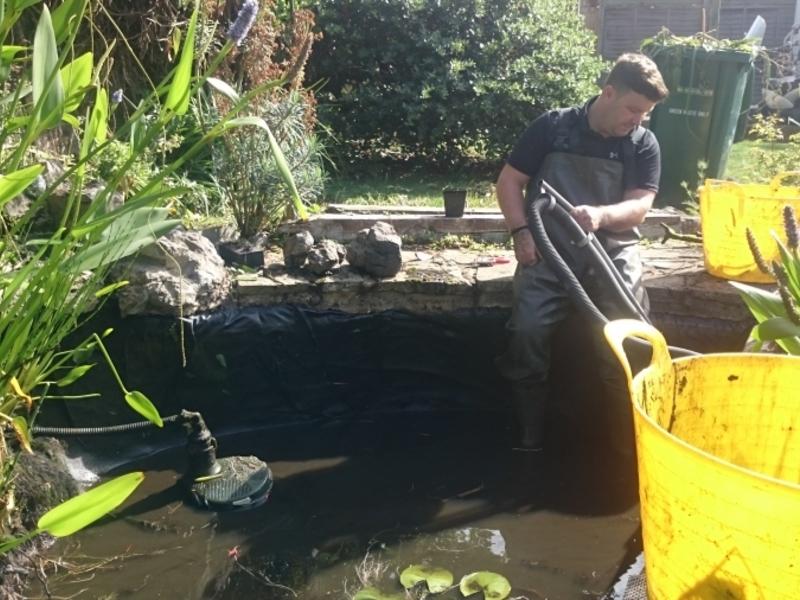 Garden pond cleaning in Hendon, London