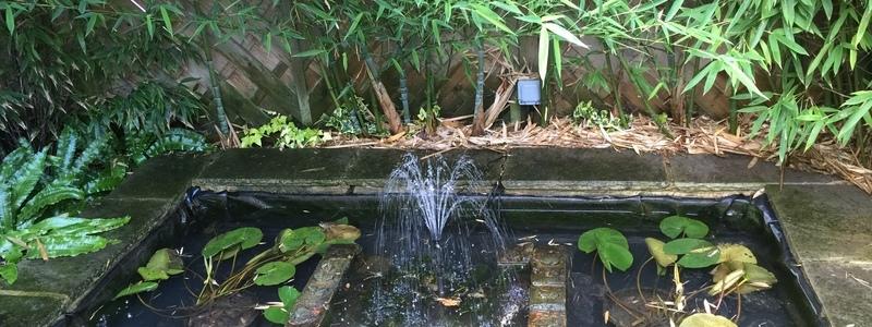 Canonbury Park, Islington, London pond clean