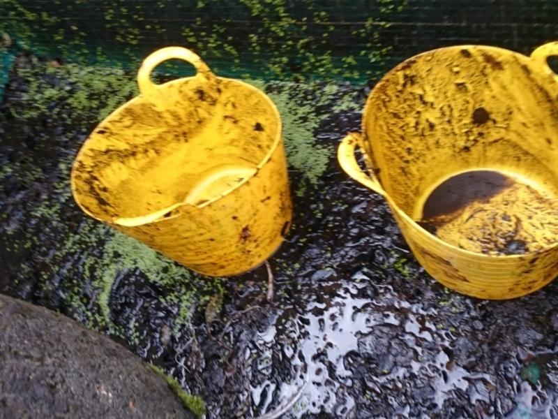 Pond clean in Thetford, Norfolk.
