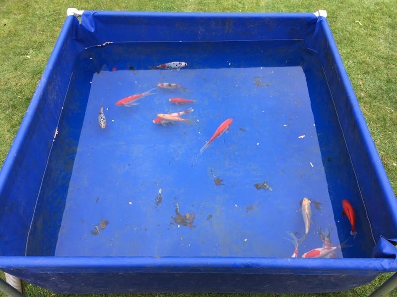 Pond clean in Broxbourne, Hertfordshire.