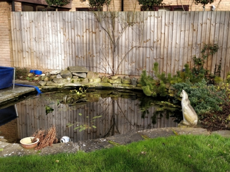 Pond clean in Madingley, Cambridgeshire