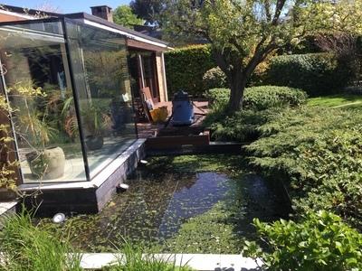 Pond clean in Putney, London