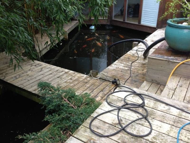 Alexander Palace, London pond clean and LED light install