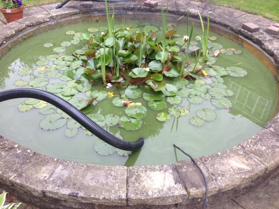 Southgate, London pond clean