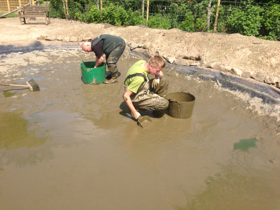 Duck pond cleaning in Kings Langley, Hertfordshire