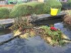 Hackney, London pond clean