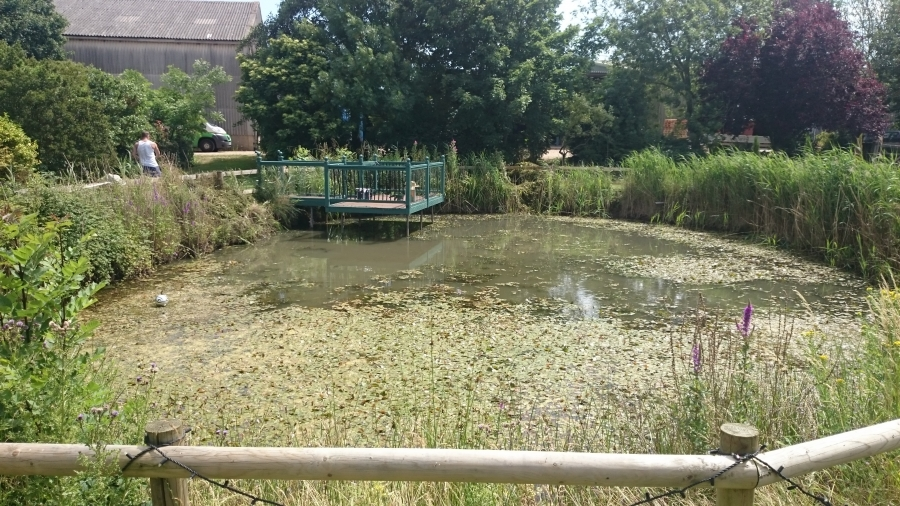 Over, Cambridgeshire weed removal and fountain