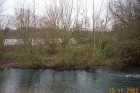 Amwell Magna Fishery Tree works along River Lea Stansted Abbotts Hertfordshire