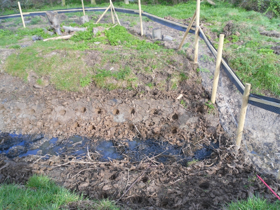 Reedbed creation for water Voles Canvey Island Essex