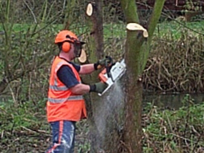 Tree removal over pond in Welham Green Hertfordshire